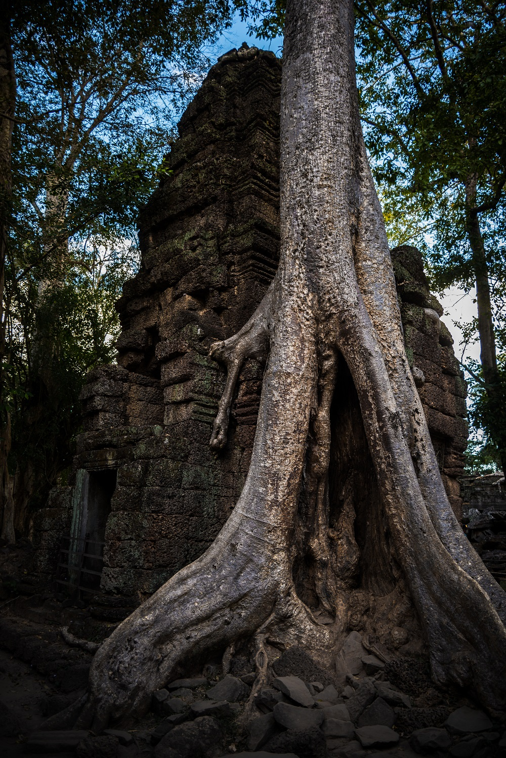 Nature taking over at Ta Prohm
